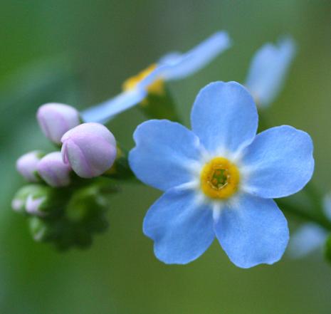 花の持つ魅力 色と形と香りとメタモルフォーゼ