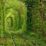 すてきだなあ~!恋のトンネルで愛を誓う