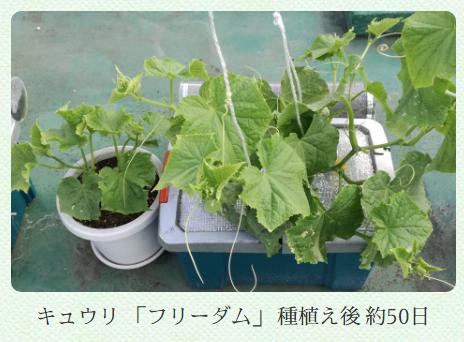 園芸療法(Horticultural Therapy)