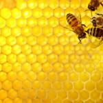 蜂の子はサプリでどうぞ!商品比較あり