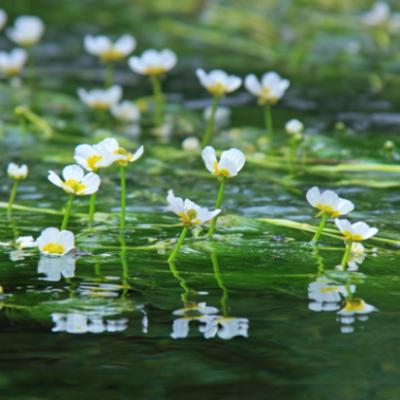 河川や海を浄化する環境に優しい意外な?取り組み