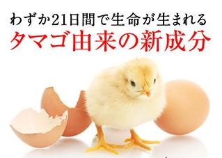 卵はまさに命のシェルター!今、卵殻膜が注目されています。