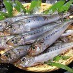 """青魚に含まれるEPAサプリメント""""安さ""""で選んだら損しますよ。"""
