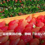 愛知県からイチゴ狩りに行くのなら、ここはいかが?