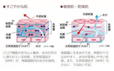 すこやかな肌と敏感肌・乾燥肌