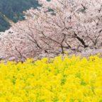 春の花の魅力ってなんだろう?