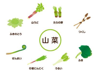 数種類の春の山菜