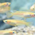 見ていて楽しい!メダカ、ゼニガメ、ヤマトヌマエビを水槽で美しく魅せる方法