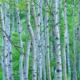 樹液の健康・美容効果を簡単にとり入れる方法と葡萄樹液の美容効果